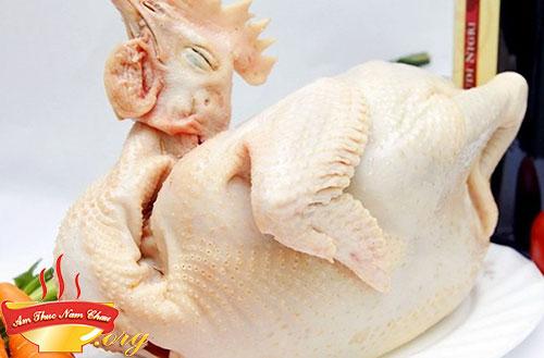 Chọn được gà ngon để luộc